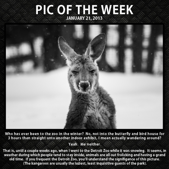 Pic of the week 13-1-21