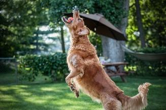 4x6 Lafond Dogs-7601