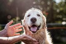 4x6 Lafond Dogs-7626