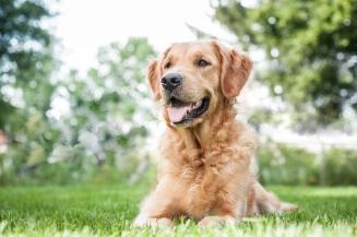 Lafond Dogs-7253