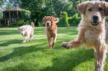 Lafond Dogs-7297