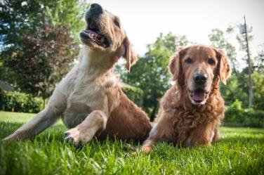 Lafond Dogs-7329
