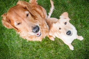 Lafond Dogs-7340