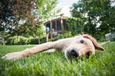 Lafond Dogs-7363
