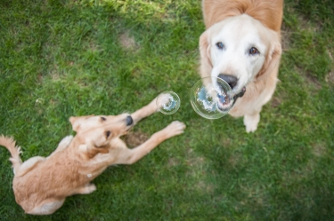 Lafond Dogs-7559