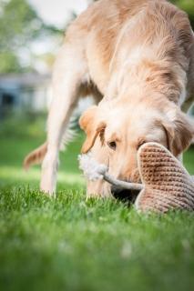 Lafond Dogs-7683
