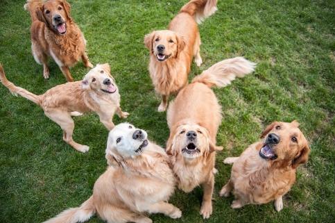 Lafond Dogs-7730