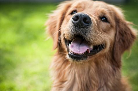 Wallets Lafond Dogs-7279