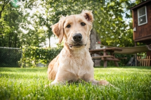 Wallets Lafond Dogs-7332