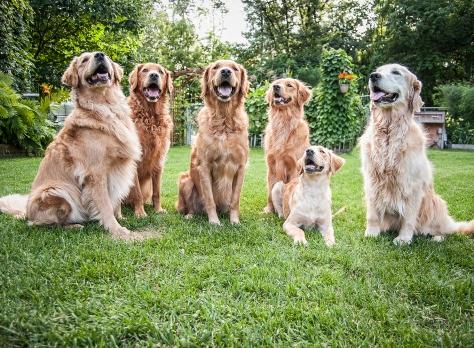 Wallets Lafond Dogs-7735