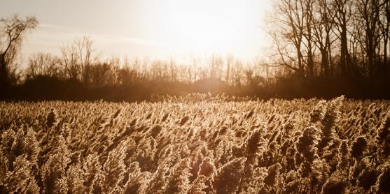 Drayton Plains Rec Nature_DSC2315