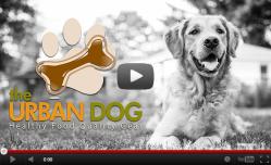 Urban Dog Main