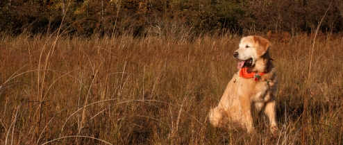 JonKPhoto Dog 002