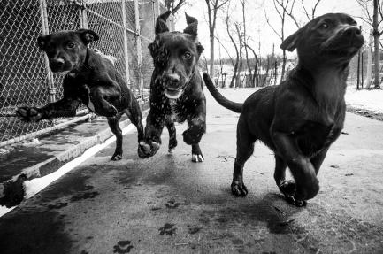 JonKPhoto Dog 011