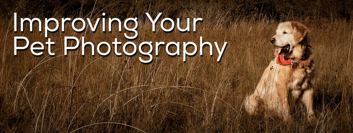 Improving Your Pet Photography